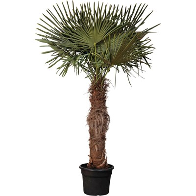 Plantes Mediterraneennes Landi