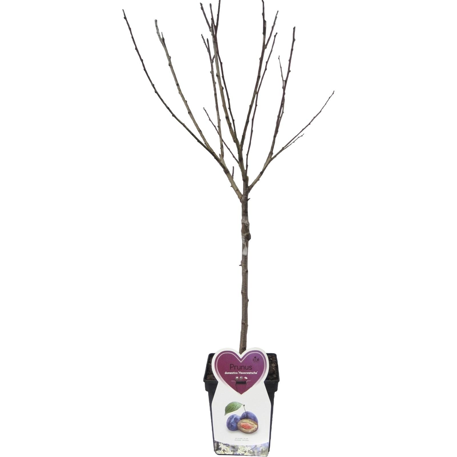 Arbre Fruitier D Intérieur arbres fruitiers p5 l mix - fruits et baies - landi