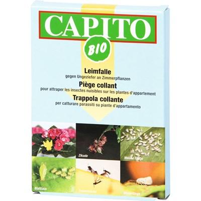 Leimfalle gelb Capito