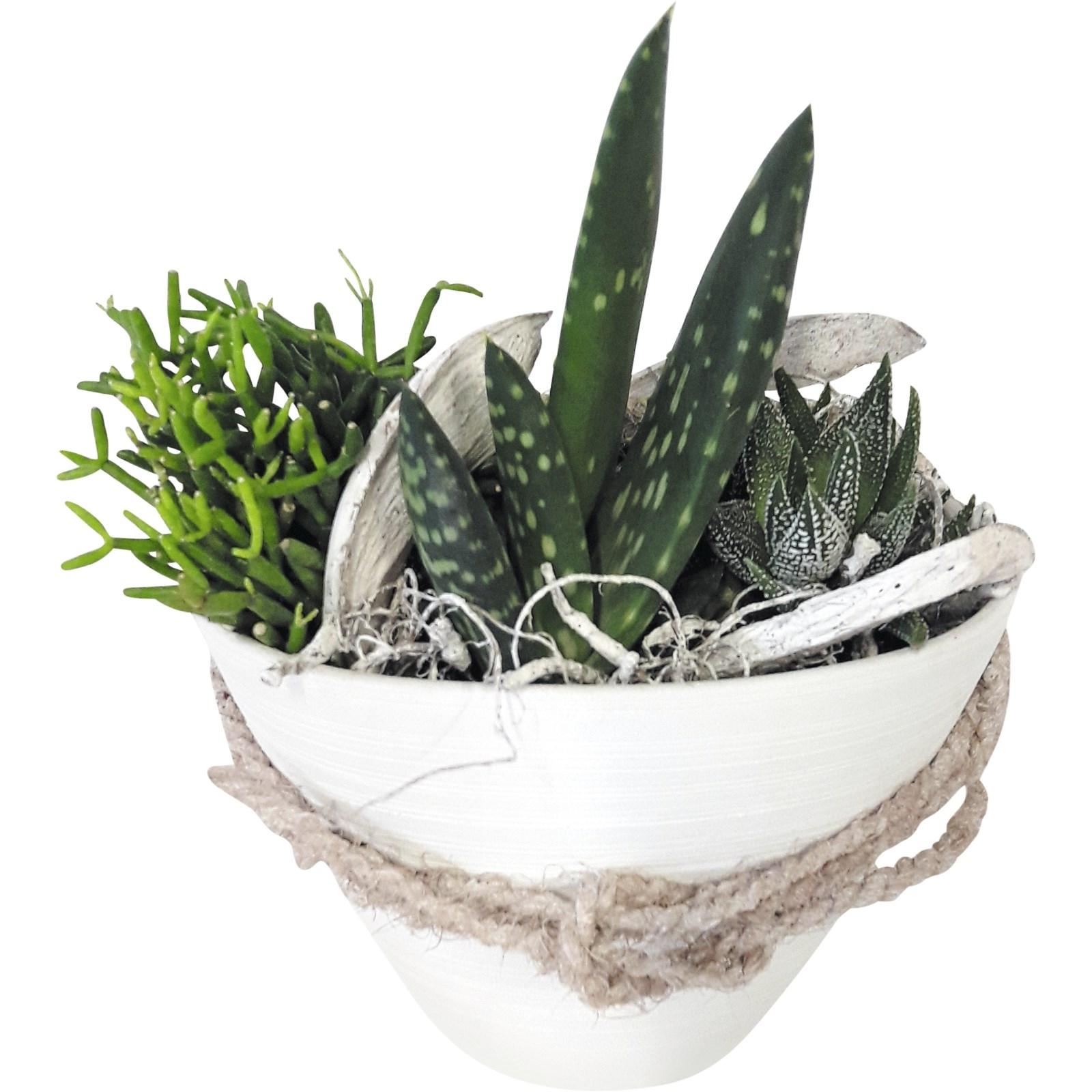 Sukkulenten Schale P14 Cm Zimmerpflanzen Landi