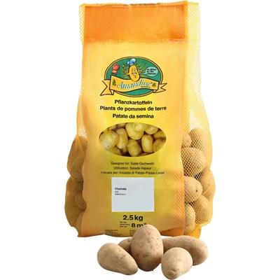 Saatkartoffeln Charlotte 1 kg