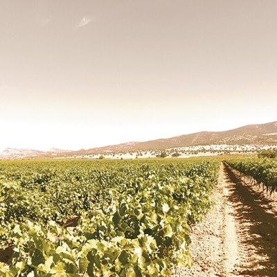 Barbian DO Toro 75 cl