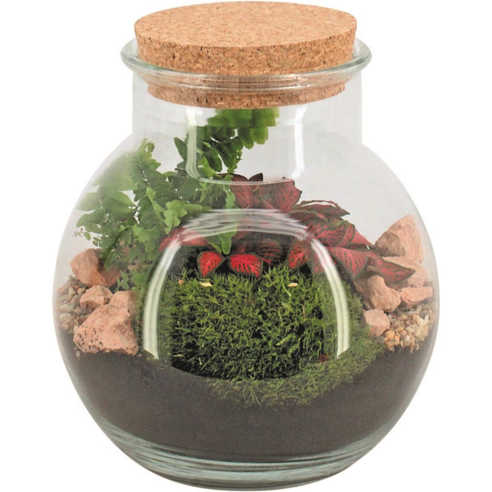 Indoor Mini Garten P16 Cm Zimmerpflanzen Landi
