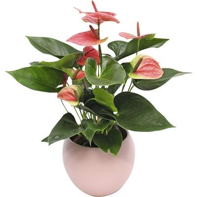 Blühpflanzen Ton in Ton P13 cm