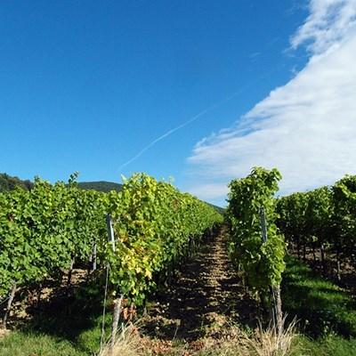 Belleroche Bag in Box 3 l