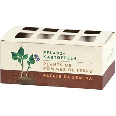 Saatkartoffeln Startset Tricolore CH