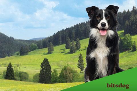 bitsdog: Natürlich gut