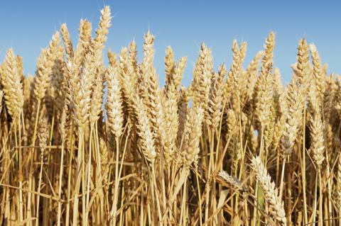 Getreide, Ölsaaten, Futtermittel