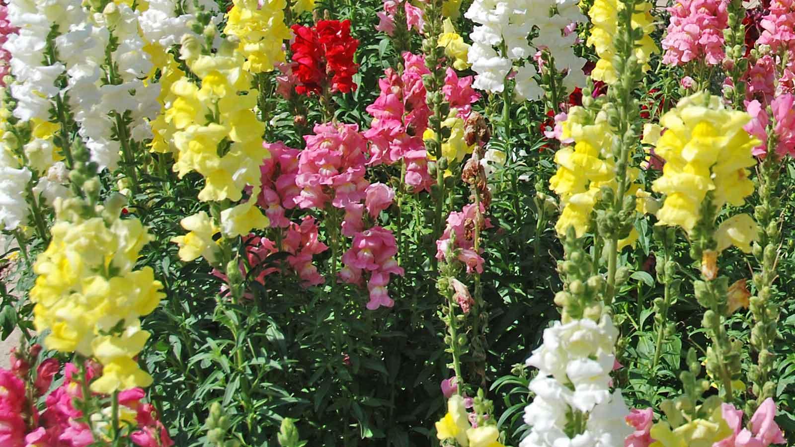 Gartenpflanzen landi for Bilder pflanzen