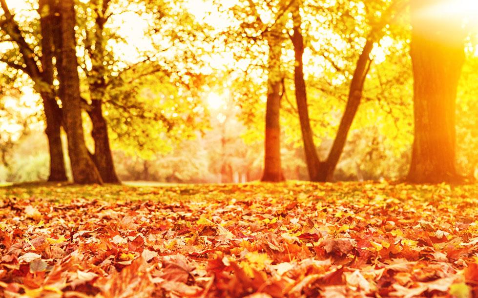 Jardin d automne landi for Landi meubles de jardin
