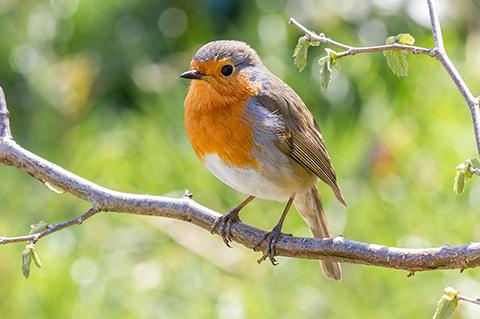 Ganzjahreszufütterung Vogel